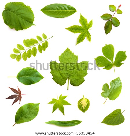 Various leaves on white background