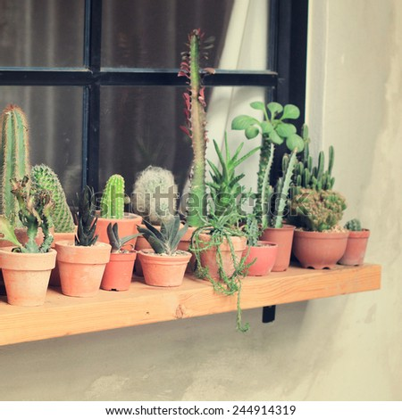 Various of cactus for decorated with retro filter effect  - stock photo