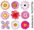Various Pink, Red, White Flowers Isolated on White Background. Selection of Strawflower, Clematis, Daisy, Dahlia, Primrose, English Daisy - stock photo