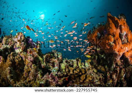 Various reef fishes swimming above the coral reefs in Gili, Lombok, Nusa Tenggara Barat, Indonesia underwater photo. There are Anthias, Wrasse and sponge. - stock photo