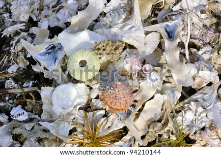 Various sea shells by the beach.