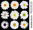 Various Selection of White Flowers Isolated on Black Background. Set of Nine Daisy, Gerber, Marigold, Osteospermum, Chrysanthemum, Strawflower, Cornflower, Dahlia Flowers - stock photo