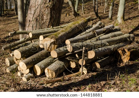 various size cut tree trunks body firewood stack in forest. deforestation area in spring. - stock photo