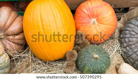 Various sizes of pumpkins, typical autumn product.
