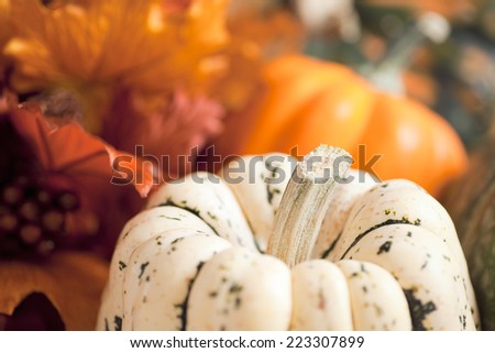 Various Squash and silk fall foliage in shallow depth of field to create soft background rich with autumn colors.  - stock photo