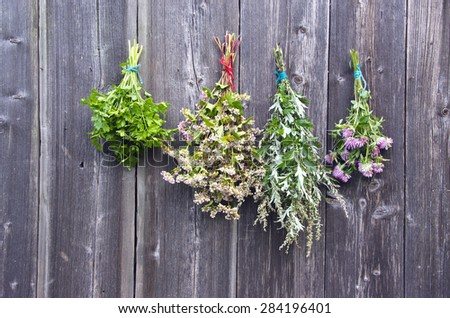 various summer time medical herbs bunch  on old wooden wall - stock photo