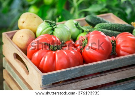 Various tomatoes and cucumbers to groceries - stock photo