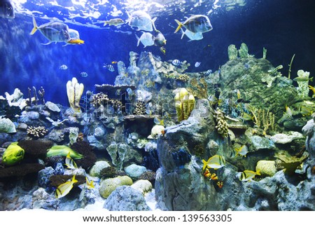 Various tropical fish on a coral reef - stock photo