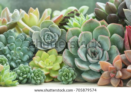 various type of succulent flowering house plants background - White Flowering House Plants
