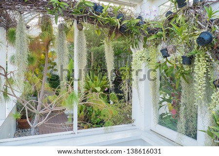 various types of flowers and plants in white house - stock photo