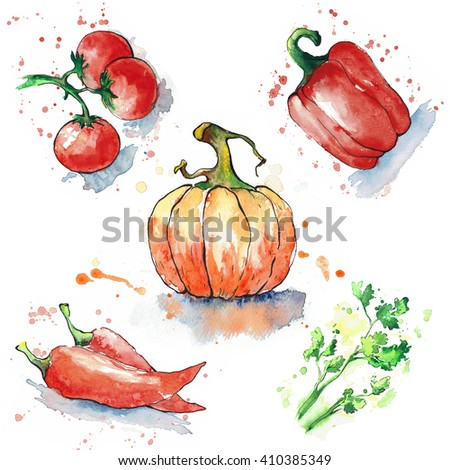 Various vegetables isolated on white background. Tomatoes, paprika, chili peppersi, coriander and pumpkin painted in watercolor. Watercolor blots. The contours are drawn in ink. Hand drawn.