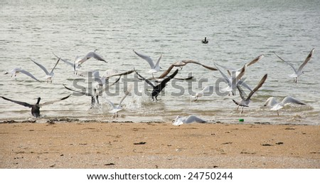 various water birds taking off - stock photo