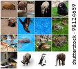 various wild animals composition - stock photo