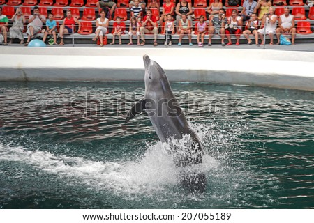 VARNA, BULGARIA - JULY 14: Dolphins during performance in dolphinarium Varna on July 14, 2013 in Varna