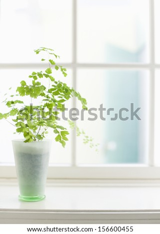 vase and flowers - stock photo