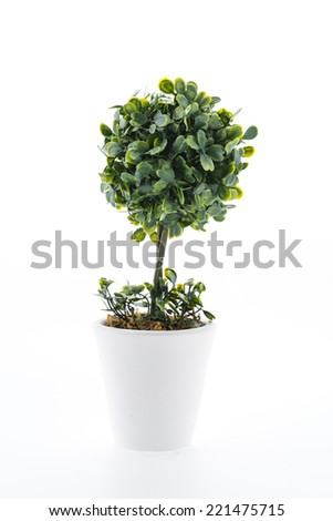 Vase flower isolated on white background
