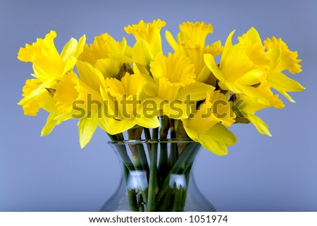 Vase full of daffodil flowers. - stock photo