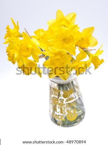 Vase of daffodils on a soft gray background.