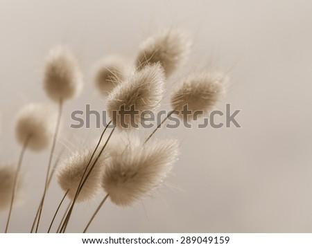 Vase of dried soft autumn flowers. Rabbit Tail Grass. vintage foto - stock photo