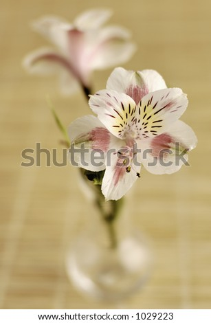 Vase of Lilies (w/ shallow depth of field) - stock photo