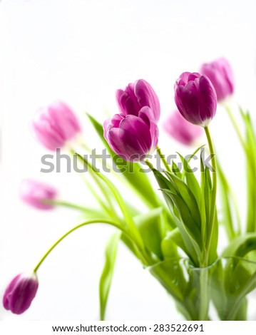 Vase of Pink Tulips Against A White Background