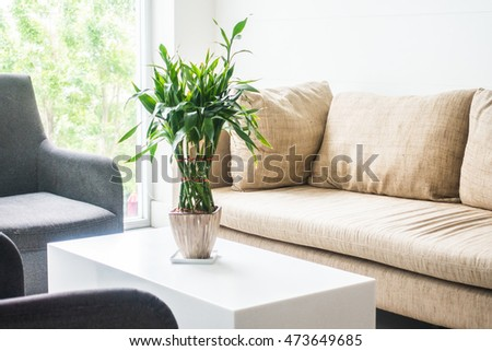 Vase plant decoration with sofa interior of living room