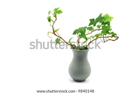 vase with ivy isolated on white - stock photo