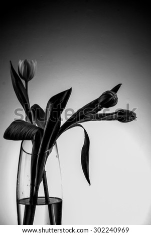 vase with tulips, black and white tulips, black, white, light and shadow, black and white picture, tulips on a white background three tulips in a vase, the vase with water standing on the table - stock photo