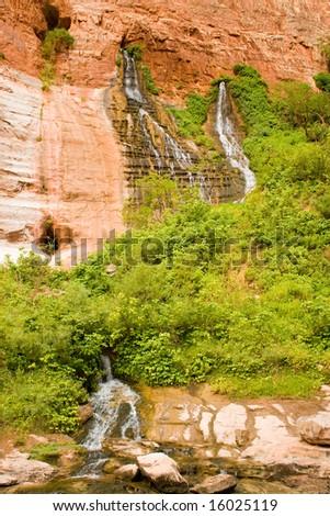 Vasey's Paradise - Grand Canyon - stock photo