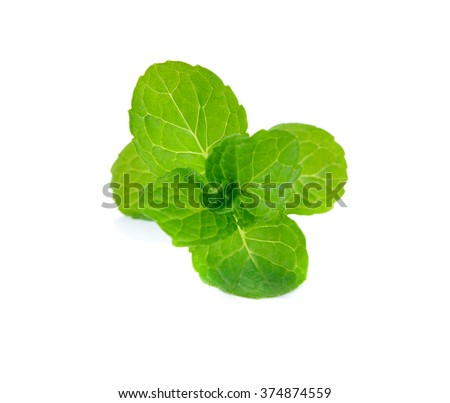 Vector fresh mint leaves on a white background - stock photo