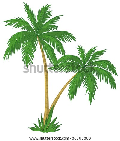 Vector, palm trees with green leaves on white background - stock photo