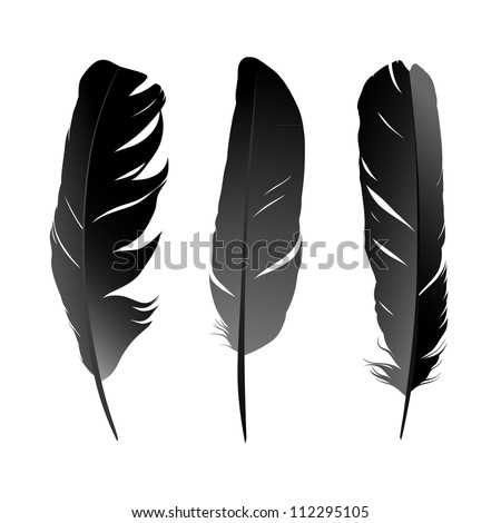 Vector set of black bird's feather on white background. Raster version of the loaded vector - stock photo