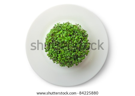 Vegan sprouting - newborn plants on the dish. Isolated on white. - stock photo