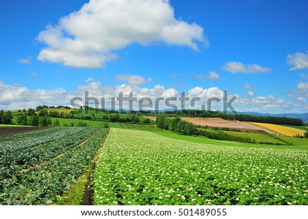 Vegetable and Flower Farms in Summer at Hokkaido