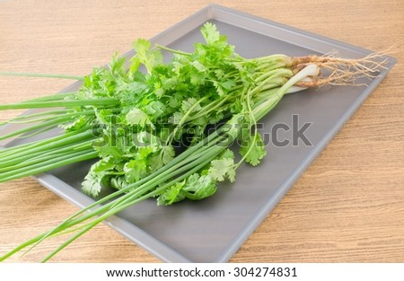 Vegetable and Herb, Bunch of Green Parsley, Chinese Parsley or Coriander and Spring Onion for Seasoning in Cooking on A Grey Tray. - stock photo
