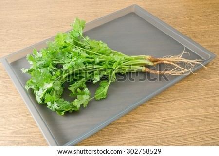 Vegetable and Herb, Bunch of Green Parsley, Chinese Parsley or Coriander for Seasoning in Cooking on A Tray. - stock photo