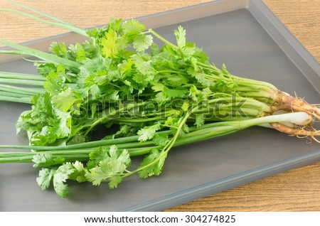 Vegetable and Herb, Fresh Parsley, Chinese Parsley or Coriander and Scallion for Seasoning in Cooking on A Tray. - stock photo