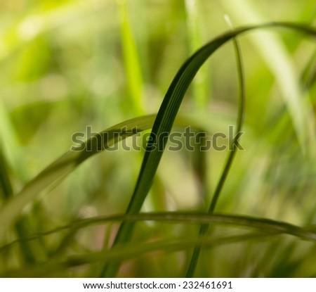 vegetable bokeh green and yellow - stock photo
