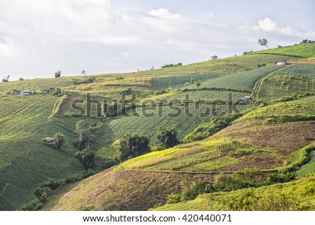 Vegetable crops on the hilly fields. Pu tubberg, Phetchaboon, Thailand.