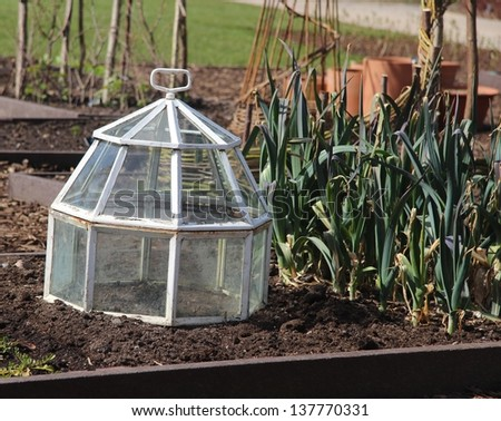 Vegetable deep bed in Spring with old glass cloche. - stock photo