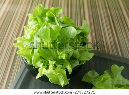 Vegetable, Delicious Fresh Green Lettuce Leaves in A Bowl on Grey Tray. - stock photo