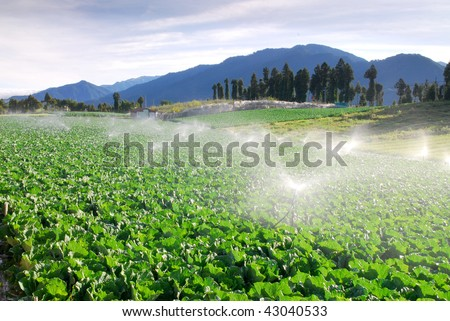 Vegetable farm with  irrigation system in  mountain agricultural region. - stock photo