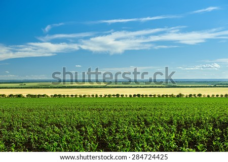 vegetable field and blue sky summer landscape - stock photo