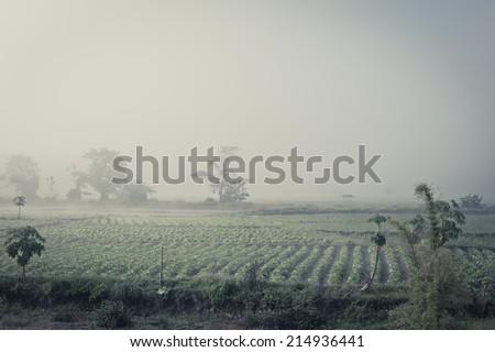 Vegetable garden at dawn - stock photo