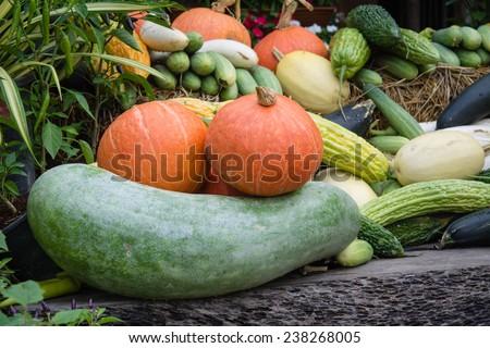 vegetable garden at jim thompson farm - stock photo