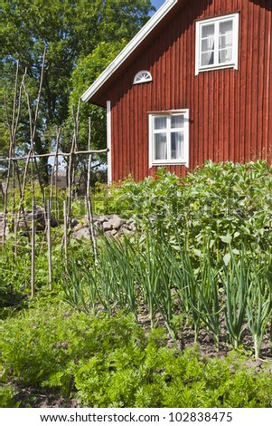 Vegetable garden at the cottage - stock photo