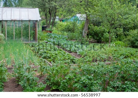 Vegetable garden in cloudy weather. One can see the beds with different vegetables and fruits, greenhouse and apple trees. No patio, no luxury, no lawn, no landscaping, no potager - stock photo