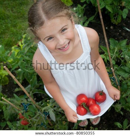 Vegetable garden - little gardener with harvests of organic tomatoes - stock photo