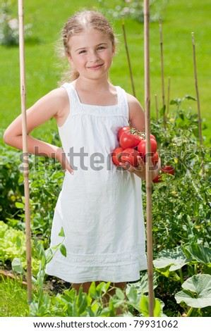 Vegetable garden - little girl with picked organic tomatoes - stock photo