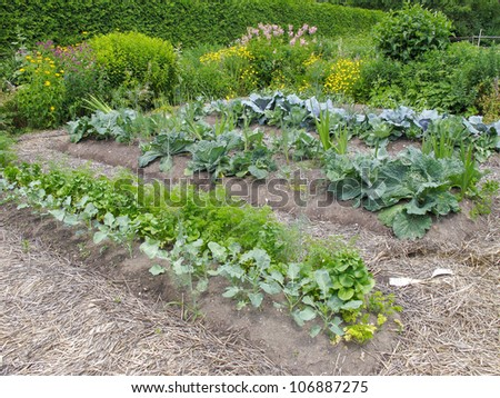 Vegetable garden with leafy greens - stock photo